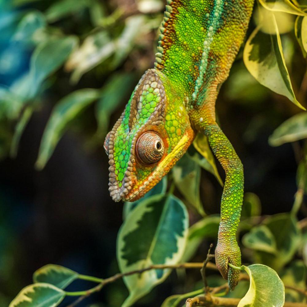 Madagaskar dieren