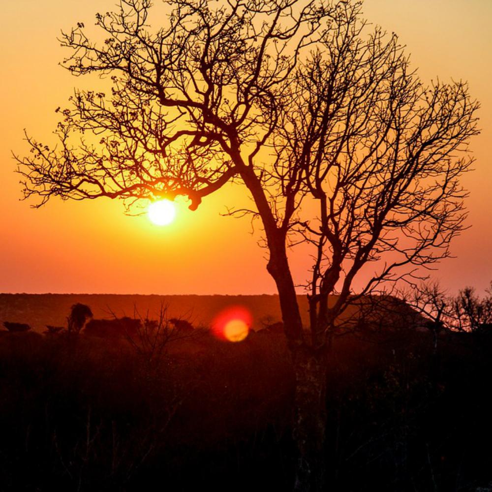 Madagaskar natuur
